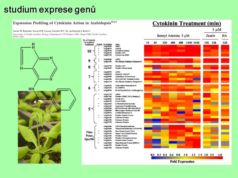 studium exprese genů