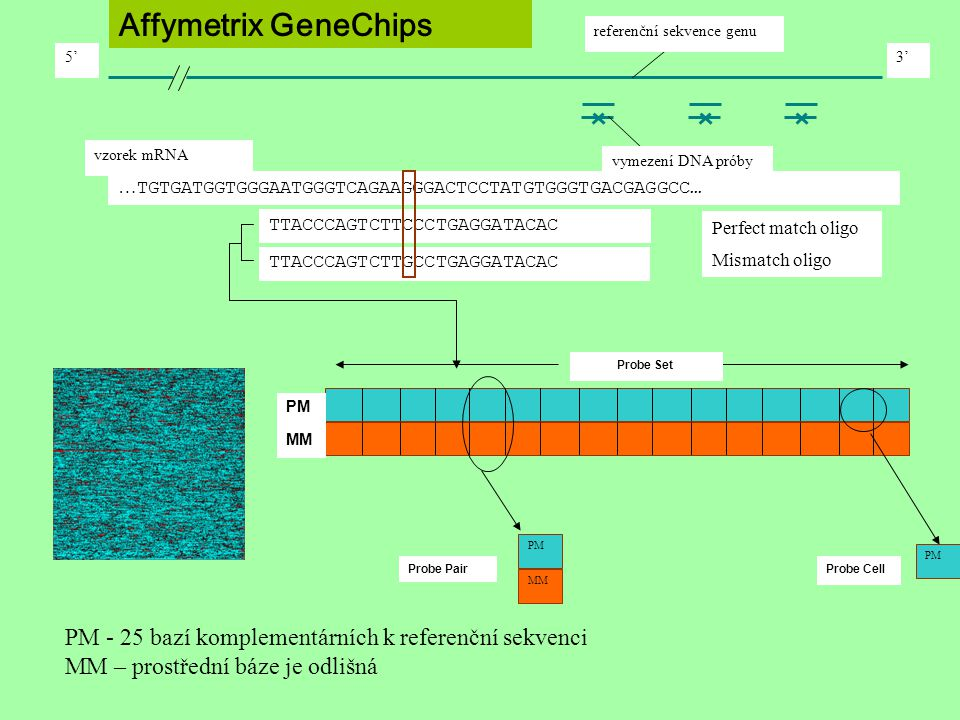PM - 25 bazí komplementárních k referenční sekvenci