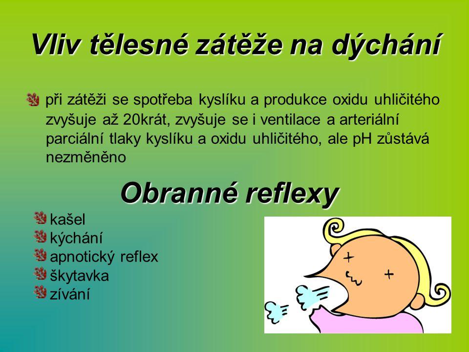 Vliv tělesné zátěže na dýchání