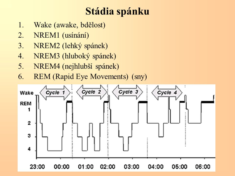 Stádia spánku Wake (awake, bdělost) NREM1 (usínání)