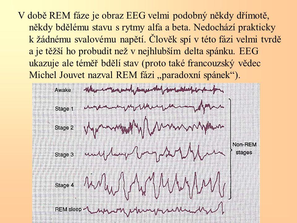 V době REM fáze je obraz EEG velmi podobný někdy dřímotě, někdy bdělému stavu s rytmy alfa a beta.
