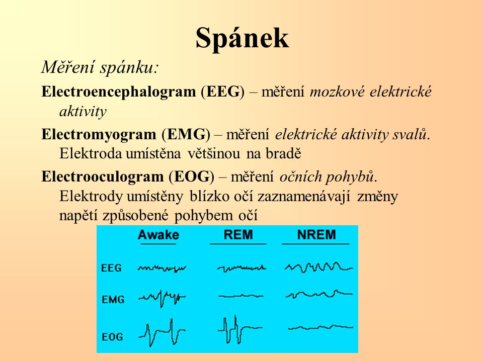 Spánek Měření spánku: Electroencephalogram (EEG) – měření mozkové elektrické aktivity.