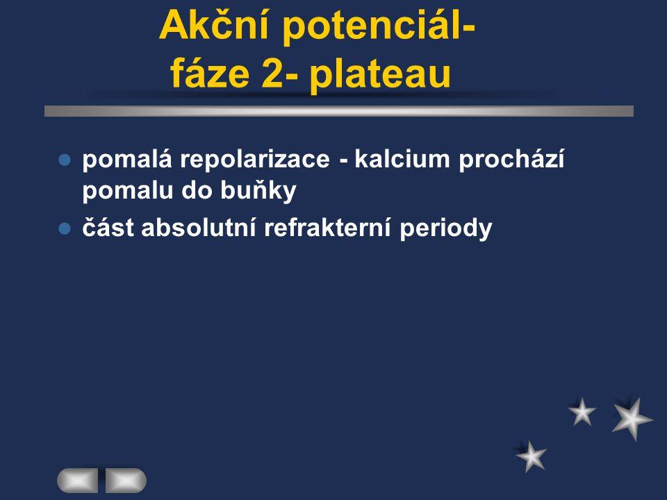 Akční potenciál- fáze 2- plateau