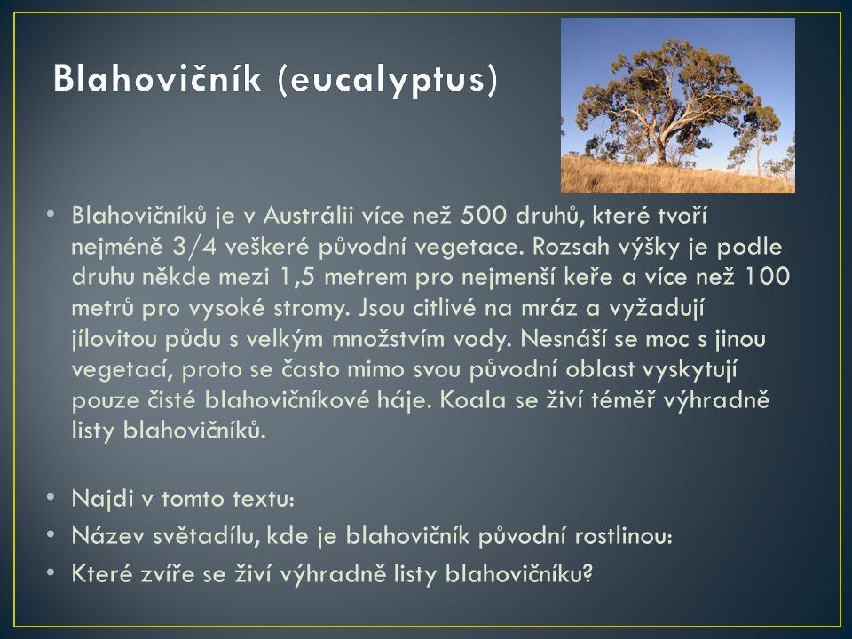 Blahovičník (eucalyptus)
