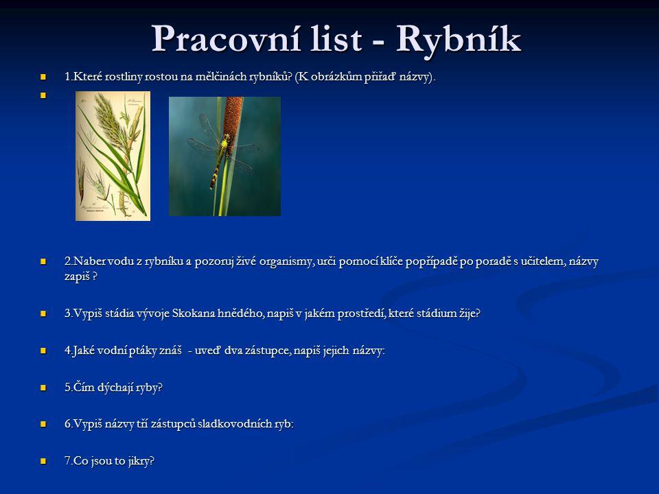Pracovní list - Rybník 1.Které rostliny rostou na mělčinách rybníků (K obrázkům přiřaď názvy).