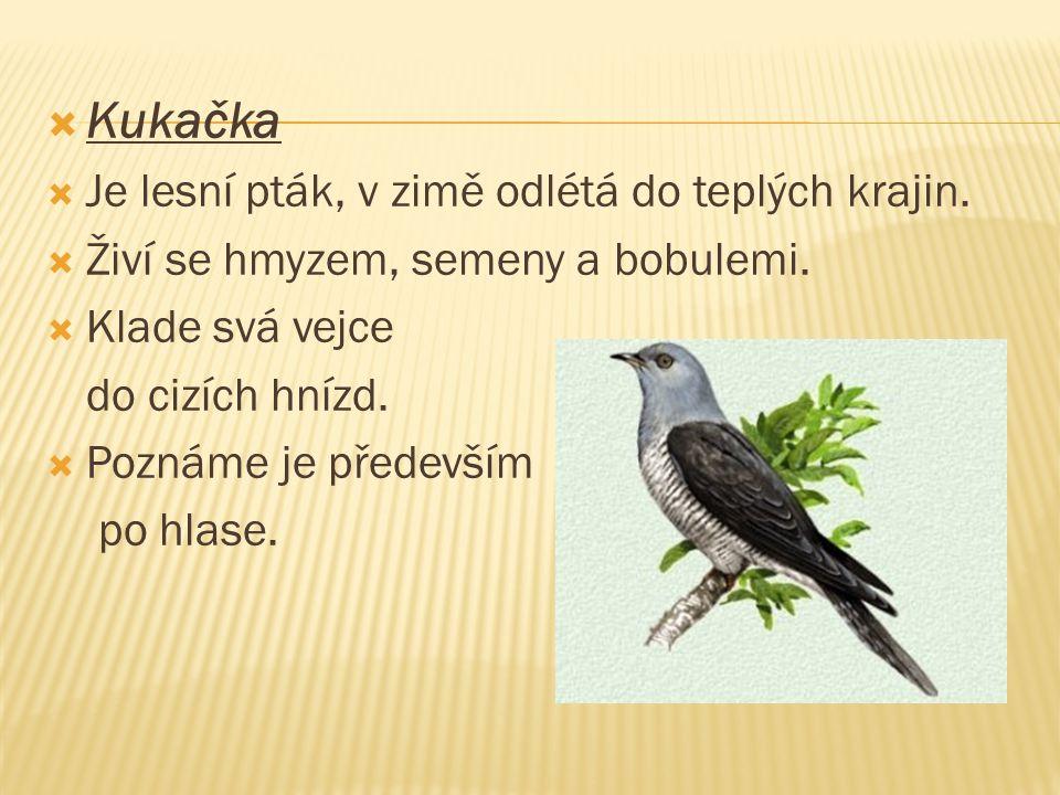Kukačka Je lesní pták, v zimě odlétá do teplých krajin.