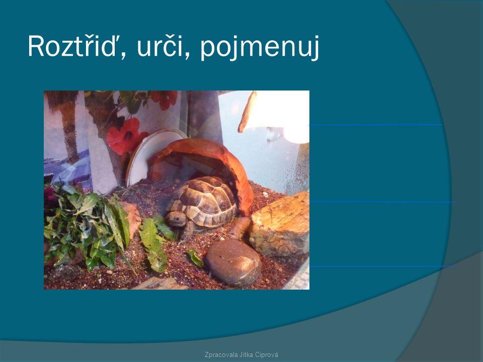 Zpracovala Jitka Ciprová