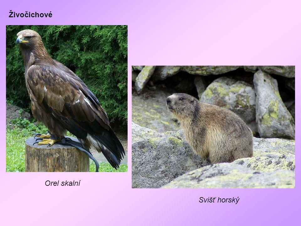 Živočichové Orel skalní Svišť horský