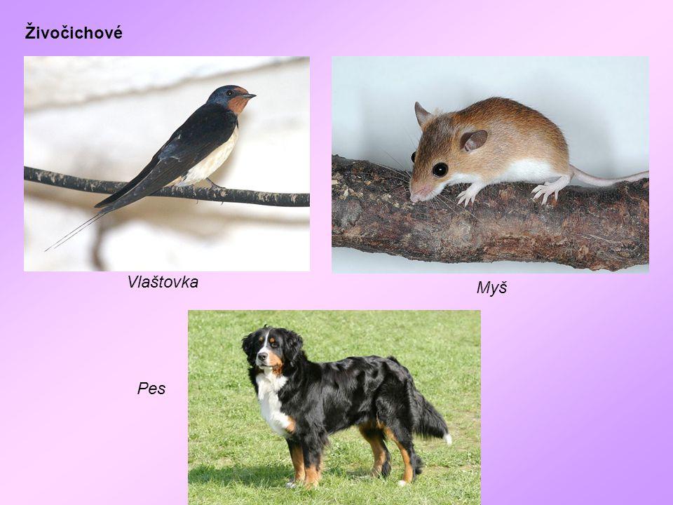 Živočichové Vlaštovka Myš Pes
