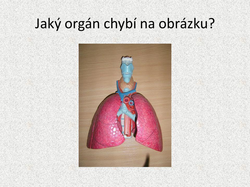Jaký orgán chybí na obrázku