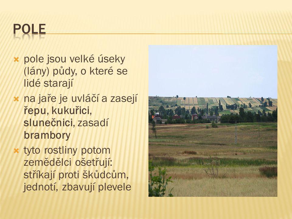 Pole pole jsou velké úseky (lány) půdy, o které se lidé starají