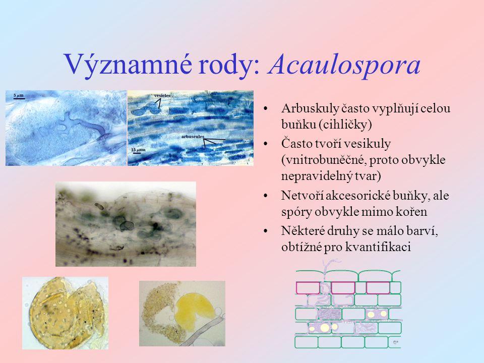 Významné rody: Acaulospora