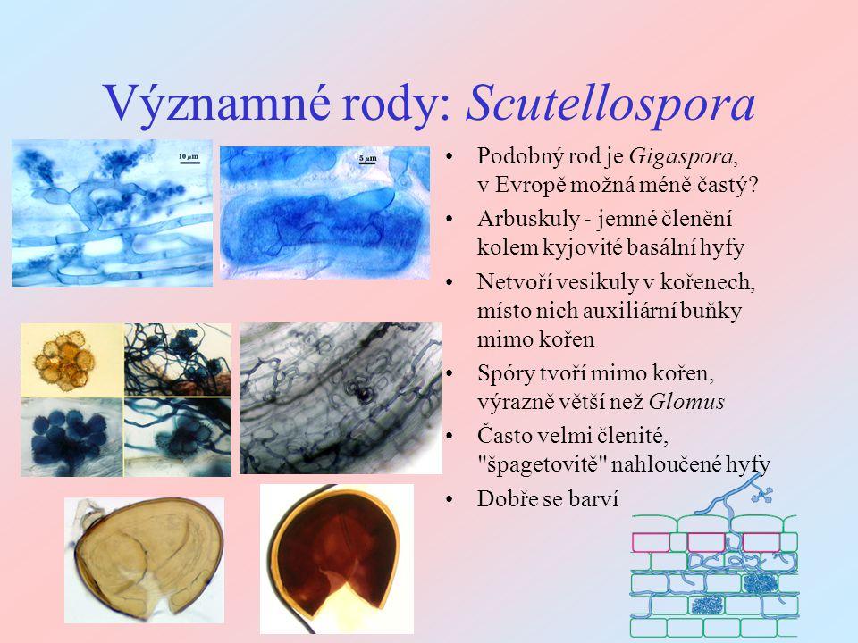 Významné rody: Scutellospora