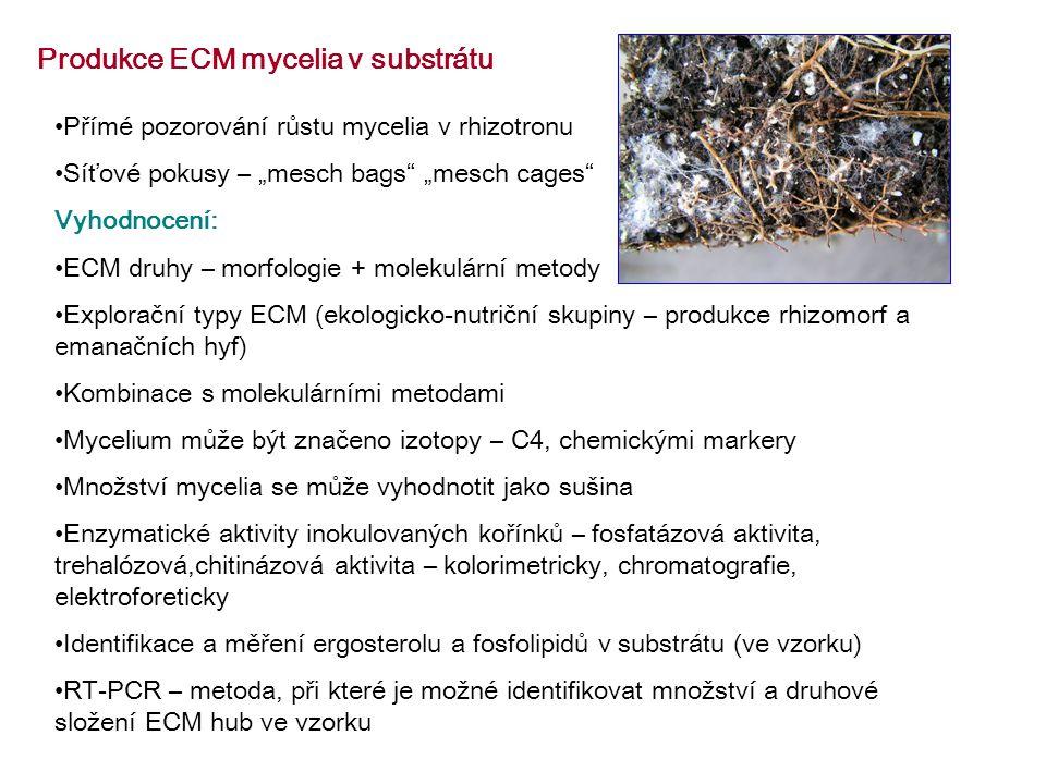 Produkce ECM mycelia v substrátu