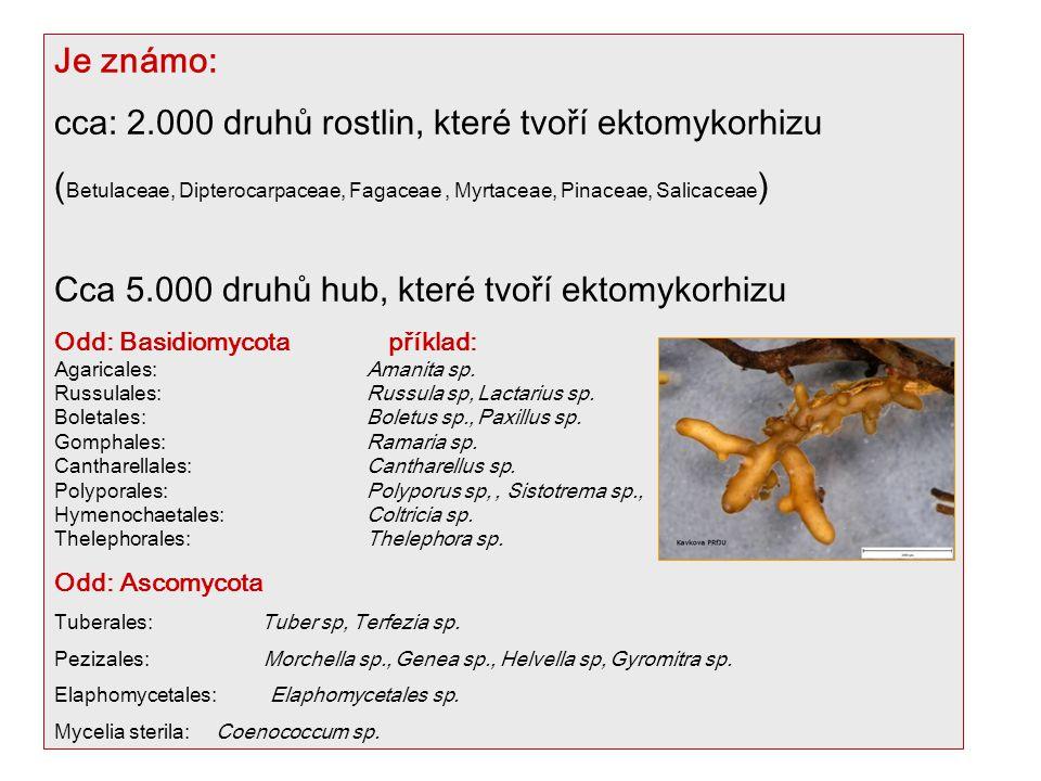 cca: 2.000 druhů rostlin, které tvoří ektomykorhizu