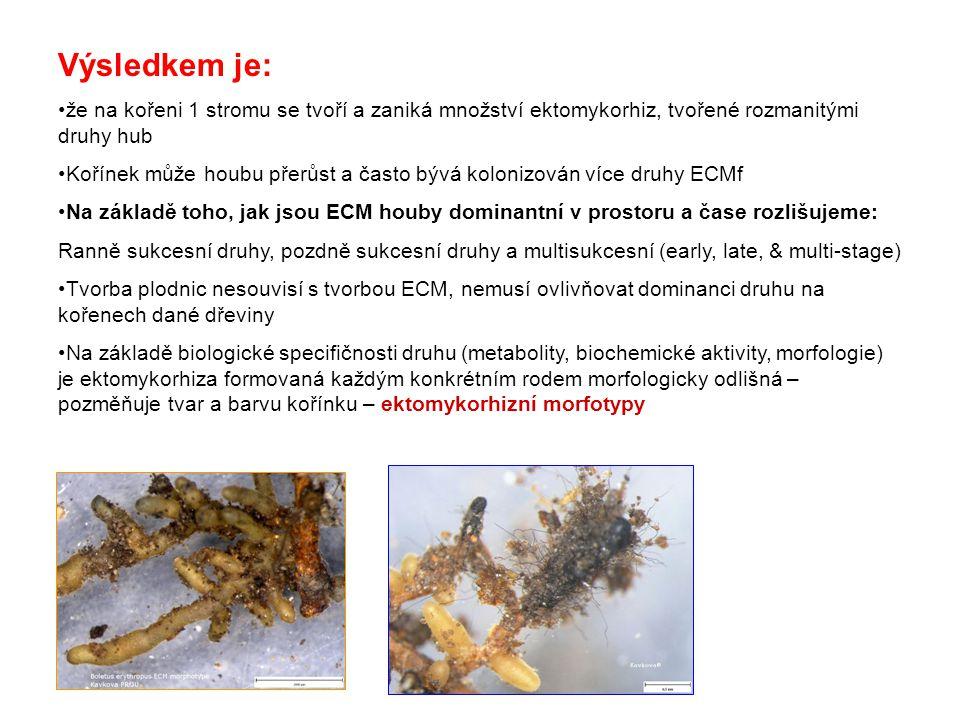 Výsledkem je: že na kořeni 1 stromu se tvoří a zaniká množství ektomykorhiz, tvořené rozmanitými druhy hub.
