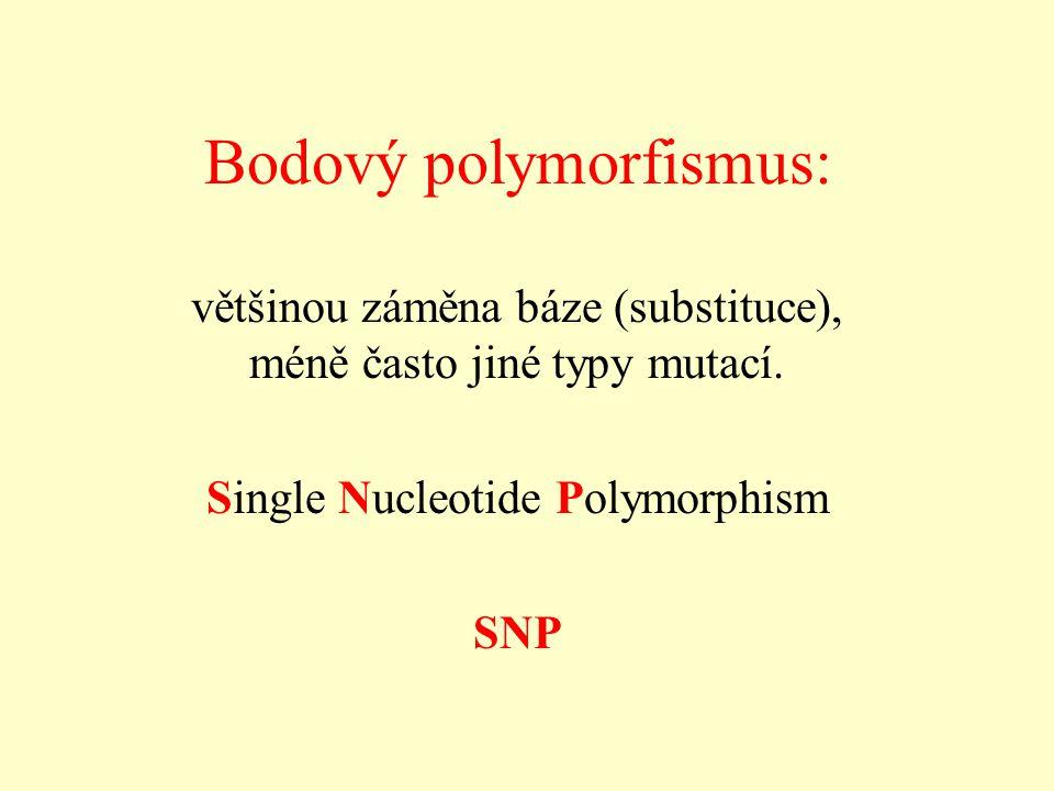 Bodový polymorfismus: