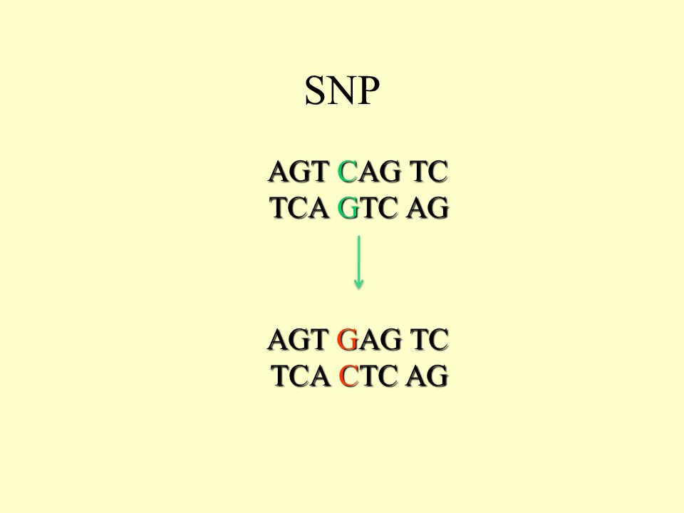 AGT CAG TC TCA GTC AG AGT GAG TC TCA CTC AG