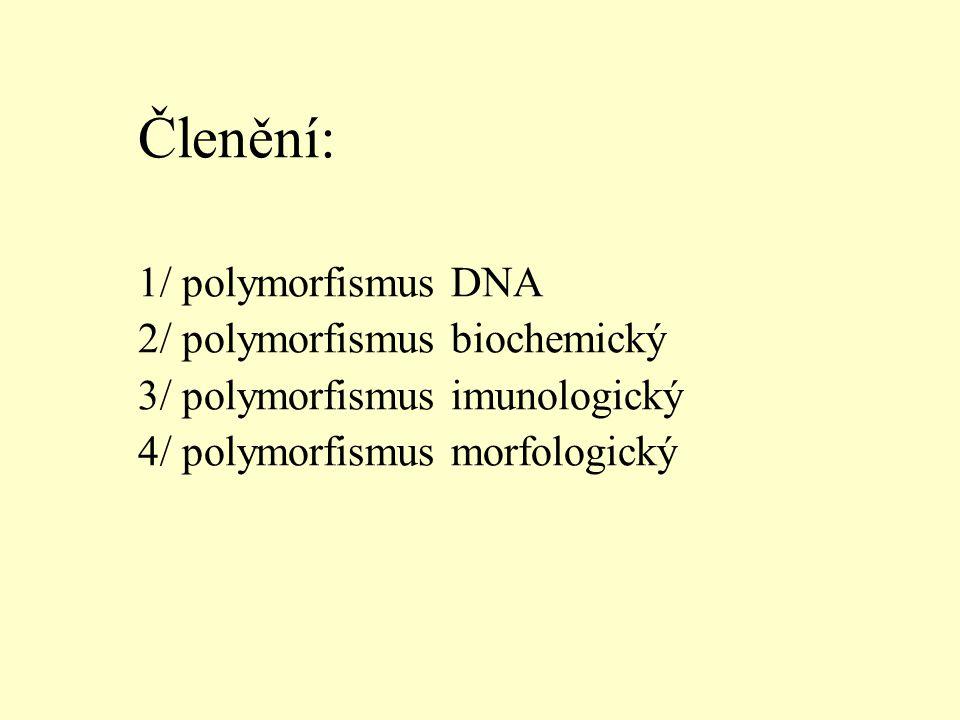 Členění: 1/ polymorfismus DNA 2/ polymorfismus biochemický 3/ polymorfismus imunologický 4/ polymorfismus morfologický