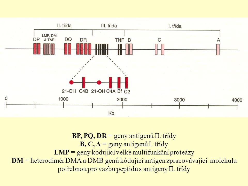 BP, PQ, DR = geny antigenů II. třídy B, C, A = geny antigenů I. třídy