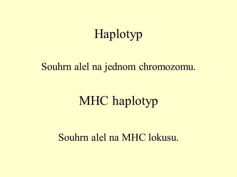 Haplotyp MHC haplotyp Souhrn alel na jednom chromozomu.