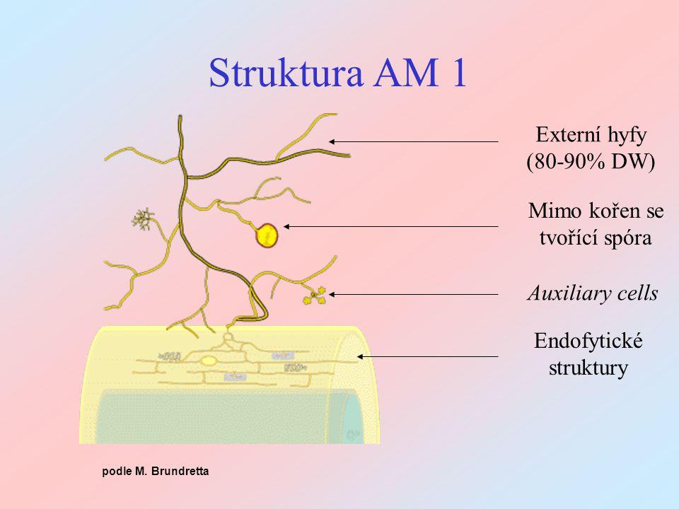 Endofytické struktury