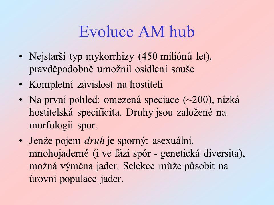 Evoluce AM hub Nejstarší typ mykorrhizy (450 miliónů let), pravděpodobně umožnil osídlení souše. Kompletní závislost na hostiteli.