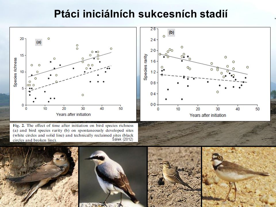 Ptáci iniciálních sukcesních stadií