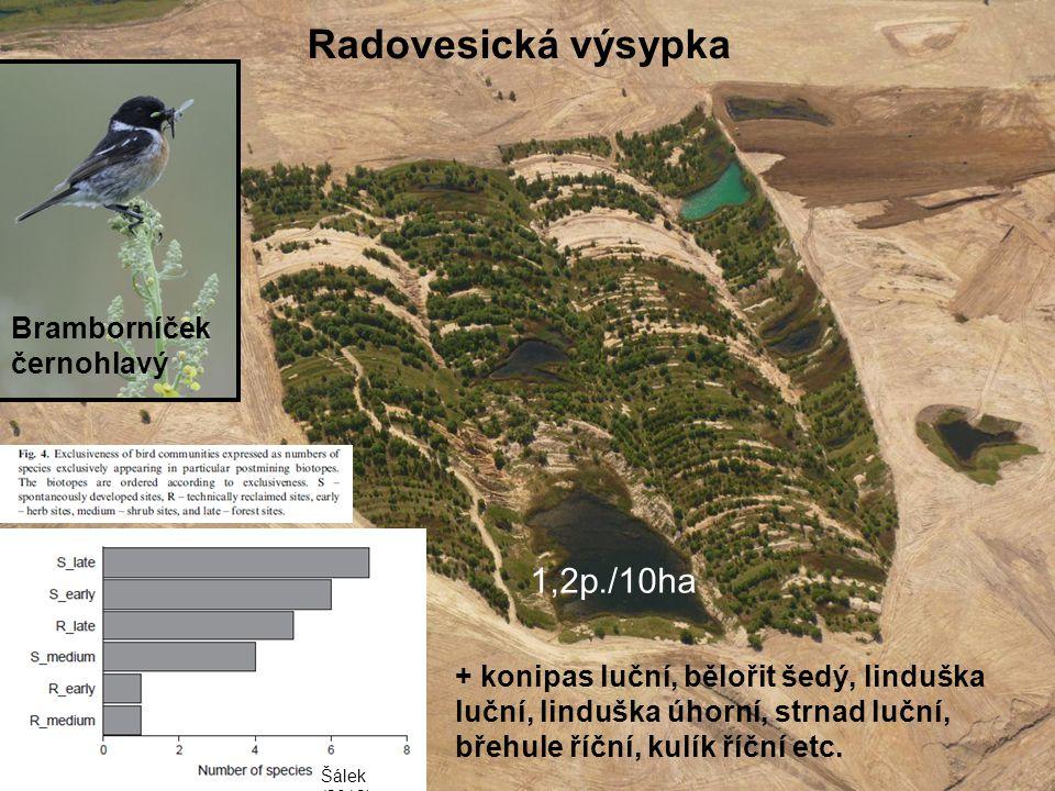 Radovesická výsypka 1,2p./10ha Bramborníček černohlavý