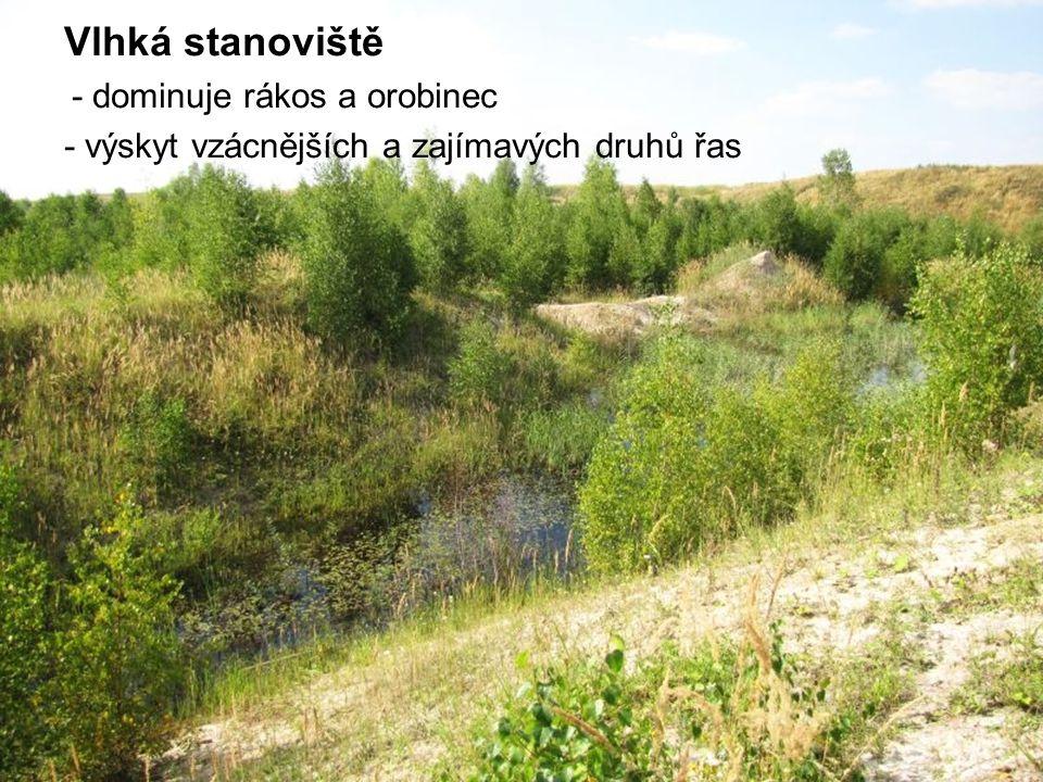 Vlhká stanoviště - výskyt vzácnějších a zajímavých druhů řas