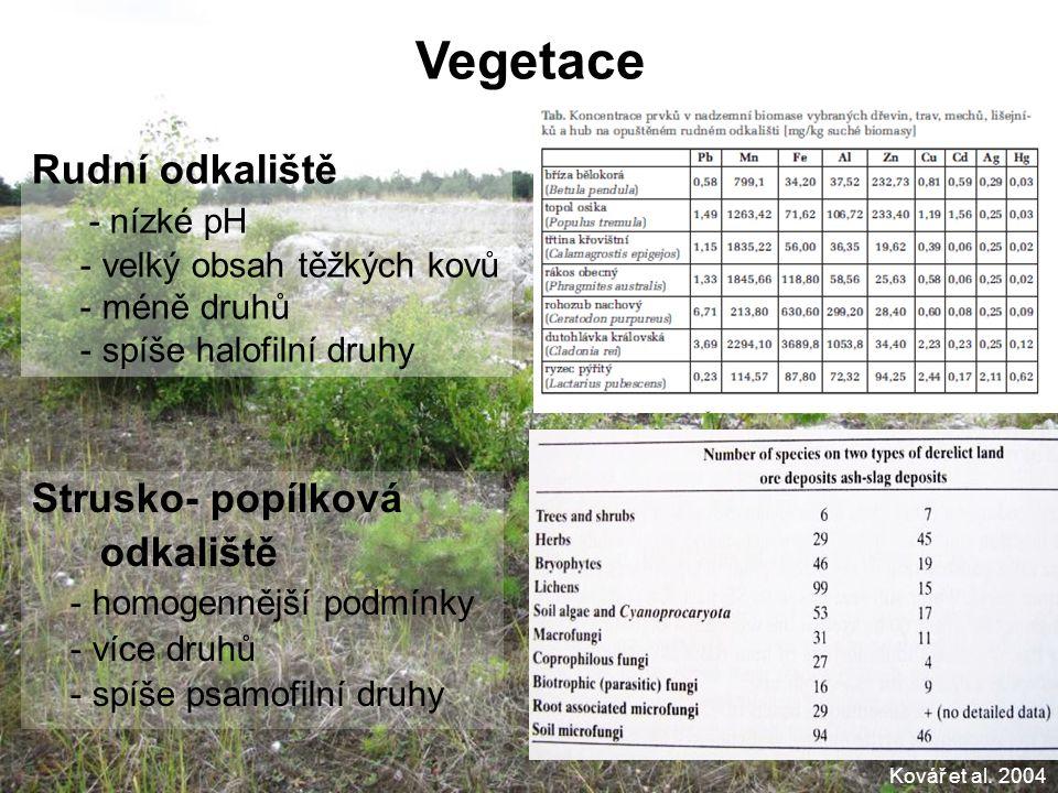 Vegetace Rudní odkaliště - nízké pH Strusko- popílková odkaliště