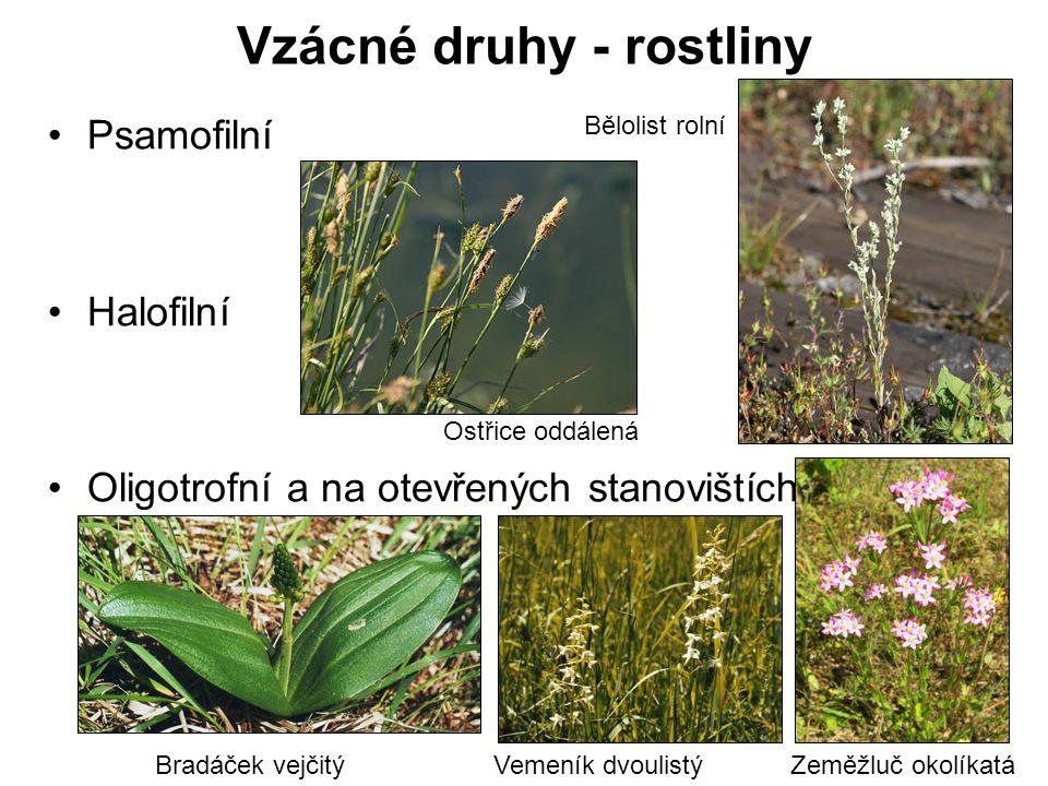 Vzácné druhy - rostliny