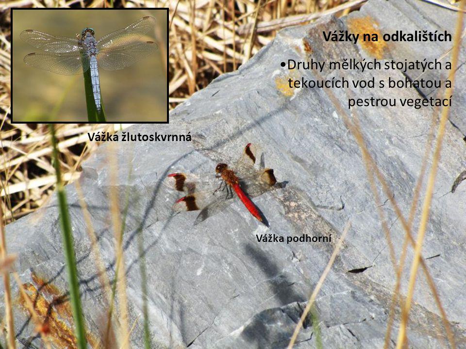 Druhy mělkých stojatých a tekoucích vod s bohatou a pestrou vegetací