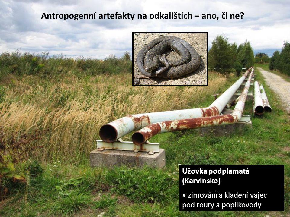 Antropogenní artefakty na odkalištích – ano, či ne