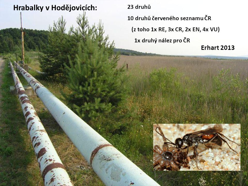 Hrabalky v Hodějovicích: