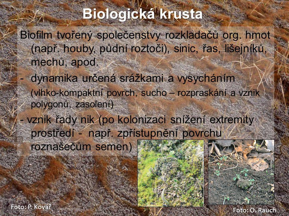 Biologická krusta Biofilm tvořený společenstvy rozkladačů org. hmot (např. houby, půdní roztoči), sinic, řas, lišejníků, mechů, apod.