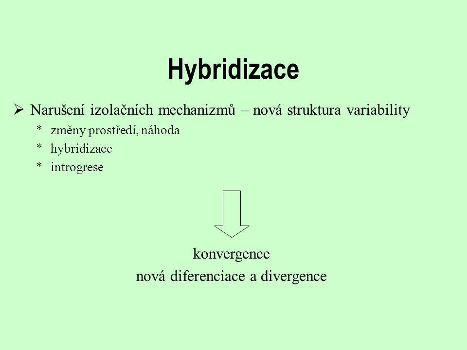nová diferenciace a divergence