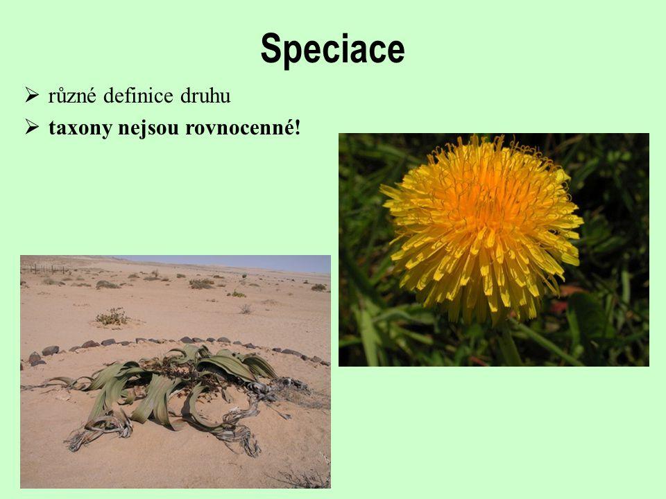 Speciace různé definice druhu taxony nejsou rovnocenné!