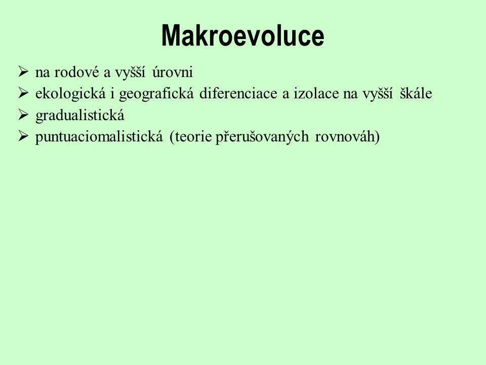 Makroevoluce na rodové a vyšší úrovni
