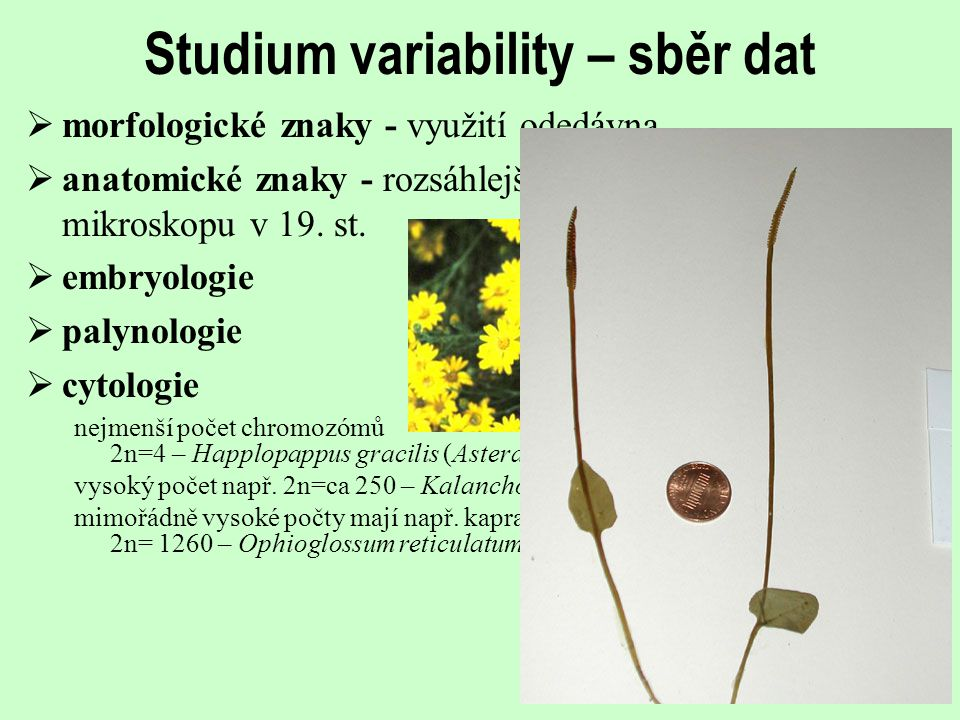 Studium variability – sběr dat