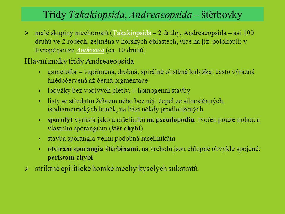 Třídy Takakiopsida, Andreaeopsida – štěrbovky