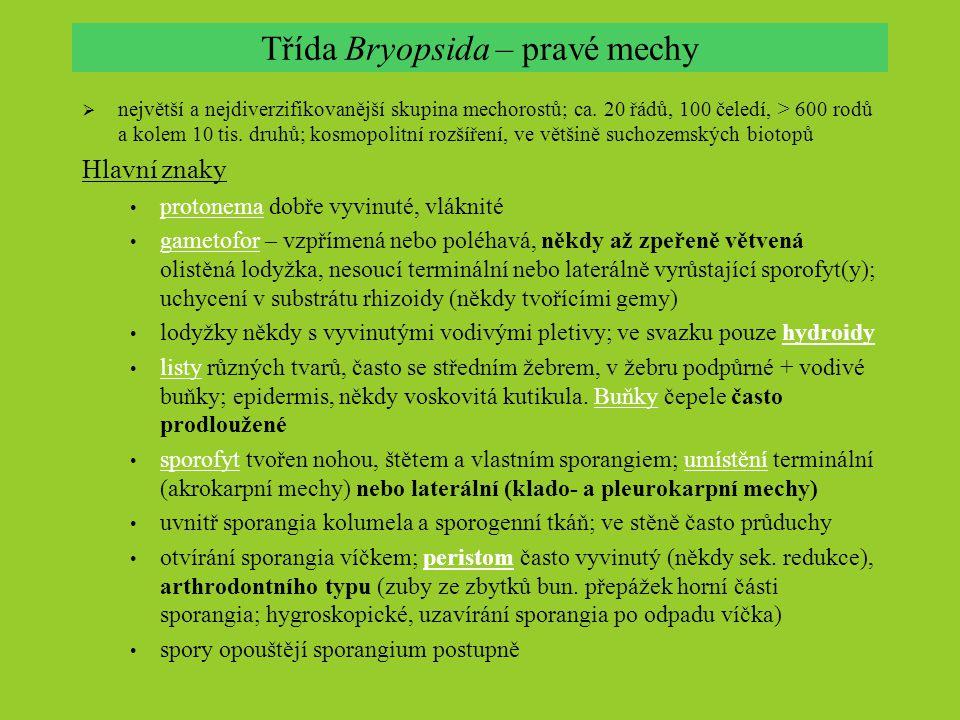 Třída Bryopsida – pravé mechy