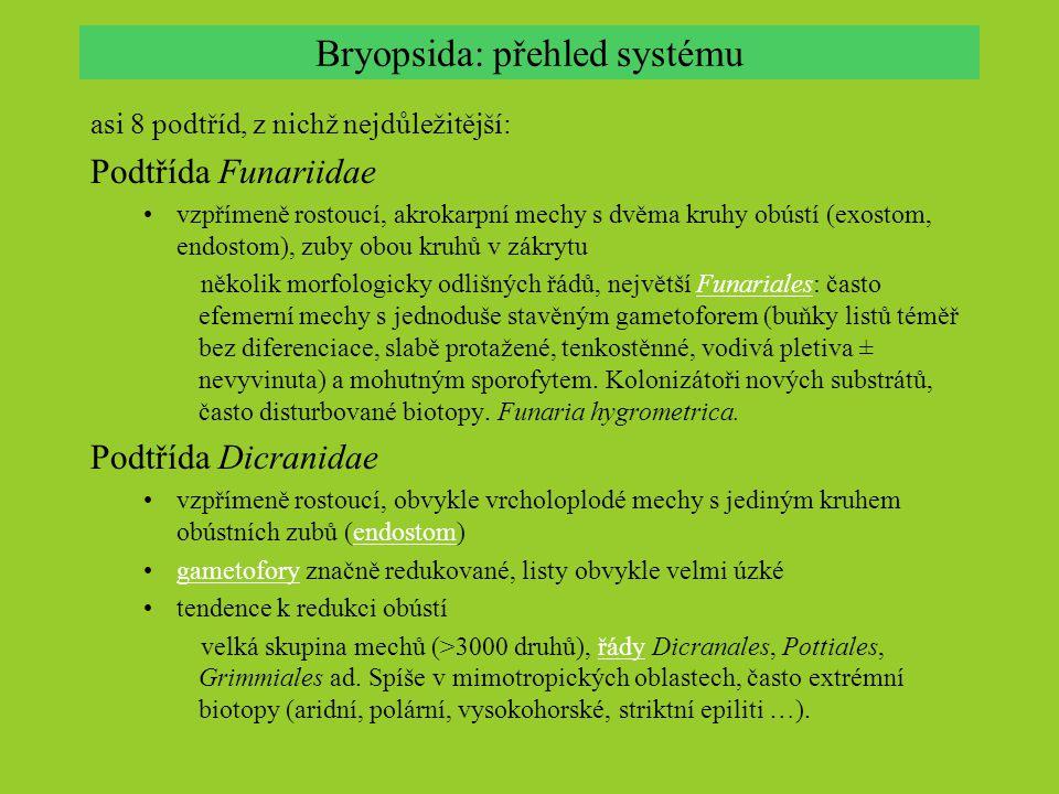 Bryopsida: přehled systému