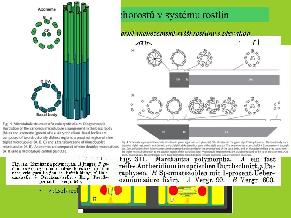 Postavení mechorostů v systému rostlin