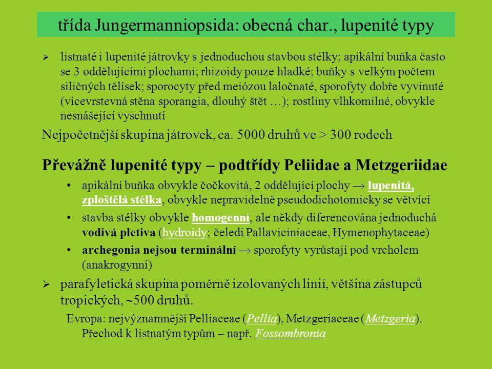 třída Jungermanniopsida: obecná char., lupenité typy