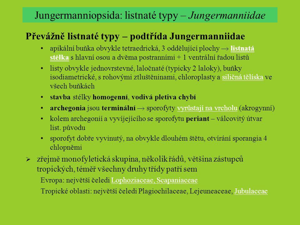Jungermanniopsida: listnaté typy – Jungermanniidae