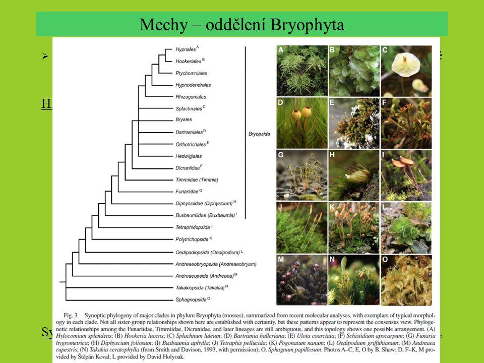 Mechy – oddělení Bryophyta