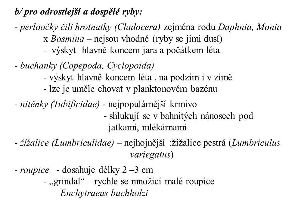 b/ pro odrostlejší a dospělé ryby: