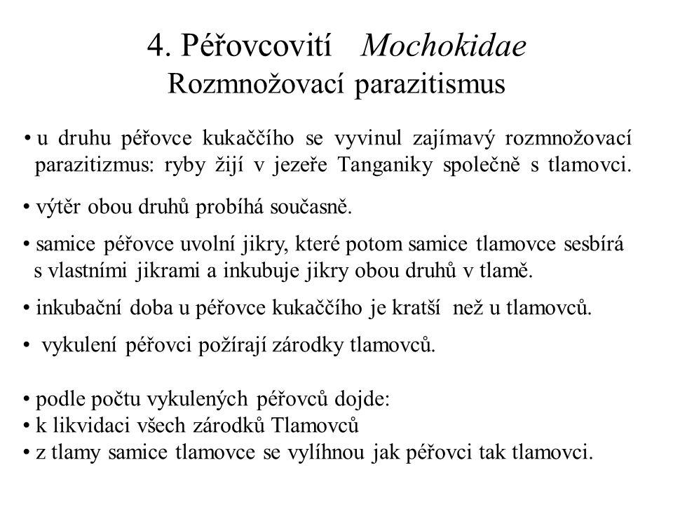 4. Péřovcovití Mochokidae Rozmnožovací parazitismus