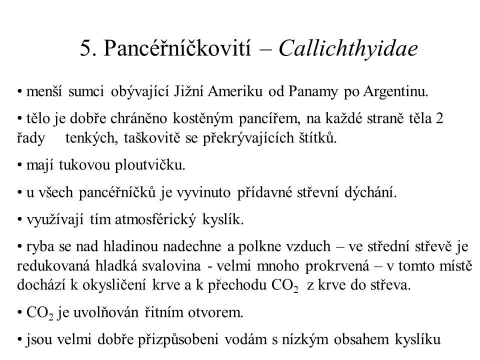 5. Pancéřníčkovití – Callichthyidae